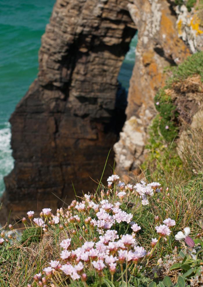 acantilados-y-flores