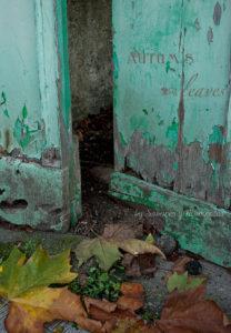 Foto-hojas-otoño-sabores-y-momentos